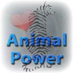 Animal Power – Meet your animal guides